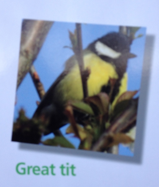 Bit redundant, no? Aren't all tits great?